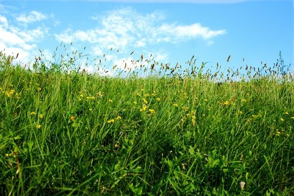 blue sky grass from the lawn hd picture 8