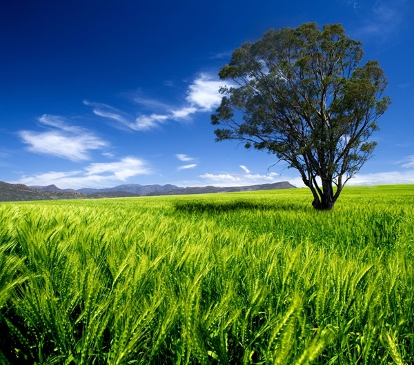 blue sky grass trees hd picture