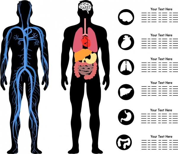 body science infographic flat silhouette design organ icons