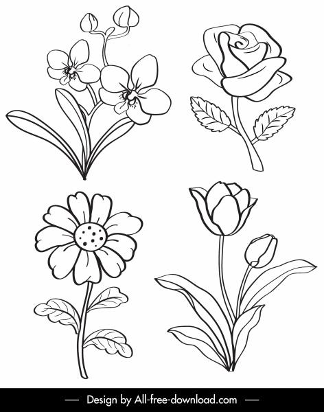 botany icons black white handdrawn sketch