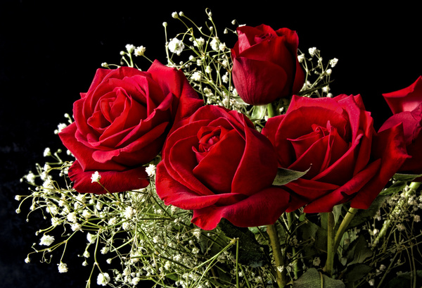 Bouquet Of Red Roses Free Stock Photos Download 7 687 Free Stock