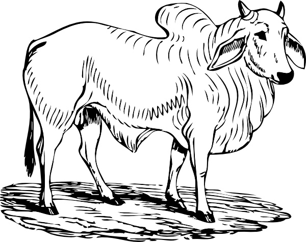 Brahma Bull Clip Art Free Vector In Open Office Drawing Svg G