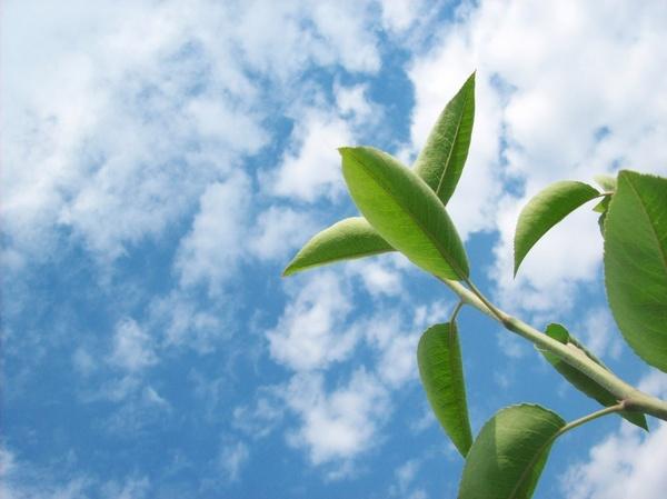branch on sky background