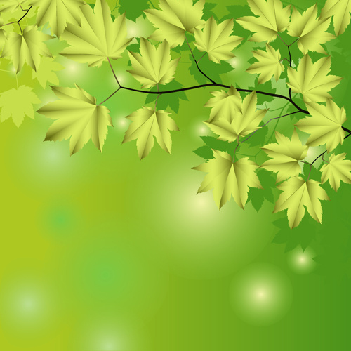 branches and leaves with green background vector