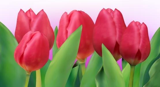 bunga tulip free vector download  166 free vector  for