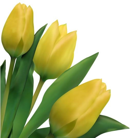 Tulip Free Vector Download (166 Free Vector) For ...