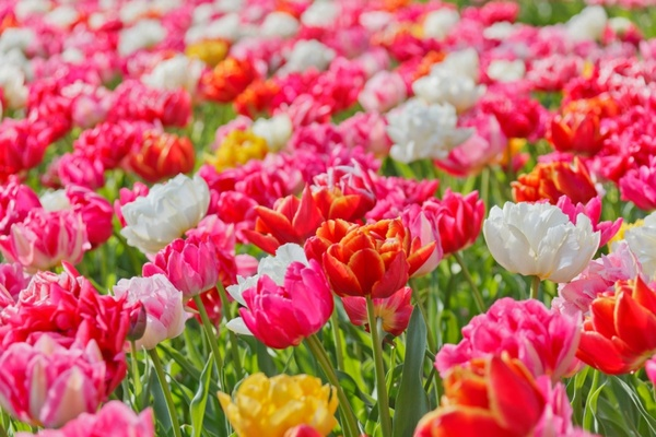 bright vivid flowers