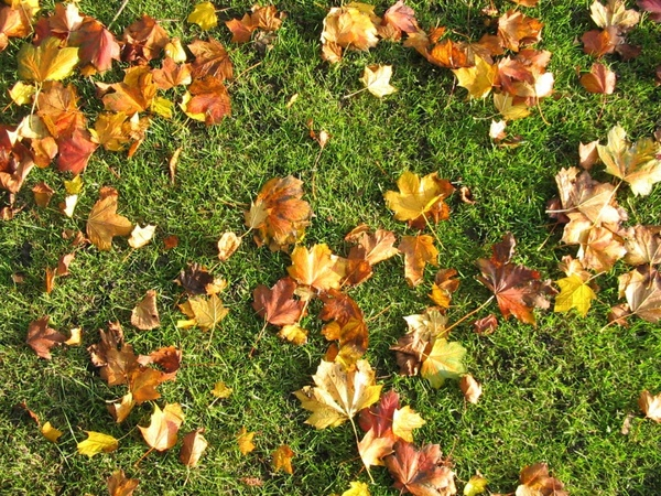 brown leaves on the grass