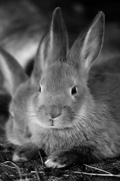 rabbit photos free stock photos download  107 free stock