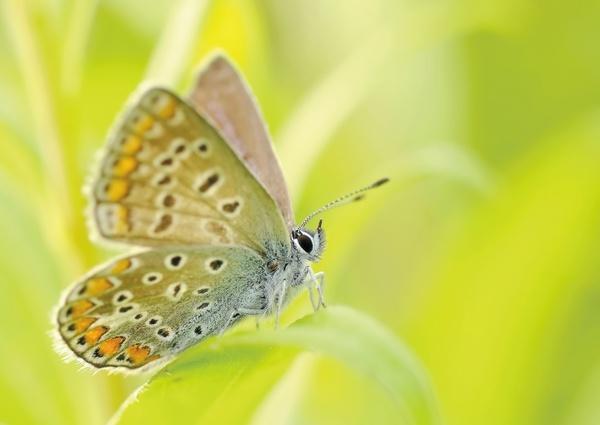 butterflies closeup insect