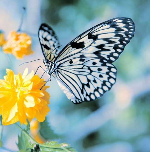 Flower And Butterfly Images Free Stock Photos Download