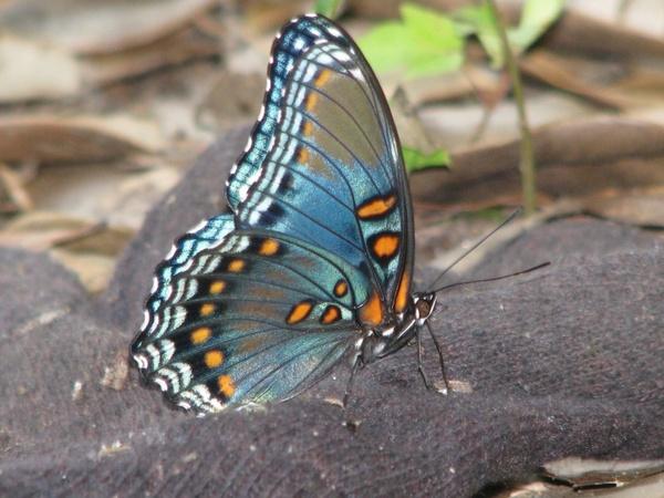 butterfly glove park