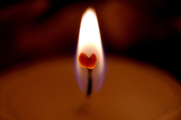 butterfly on fire