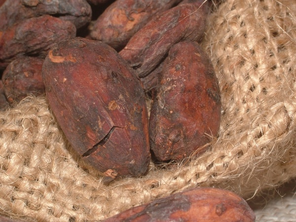 cacao beans cocoa cocoa bean