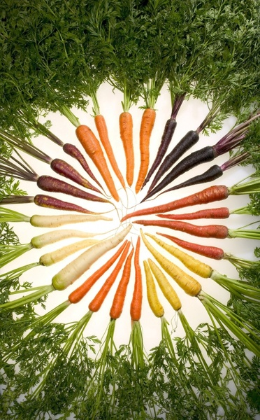 carrots variety vegetables