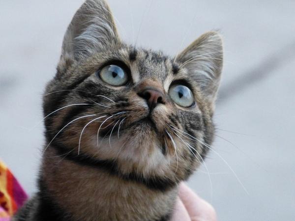 cat cat's eyes curious