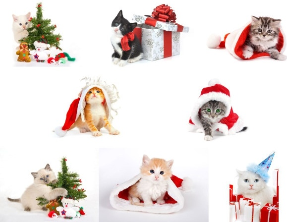 cat christmas hd photo gallery
