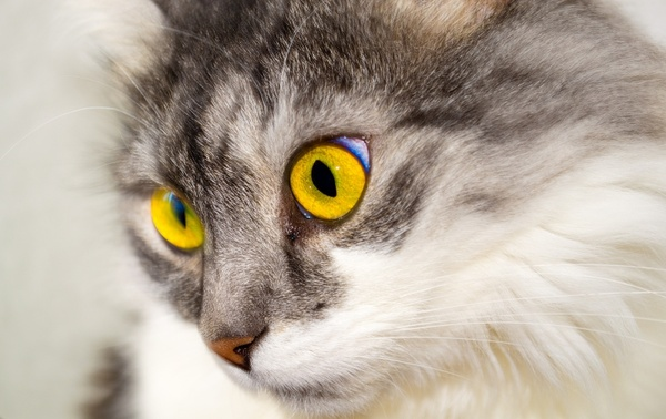 cat eyes face