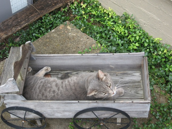 cat in wagon