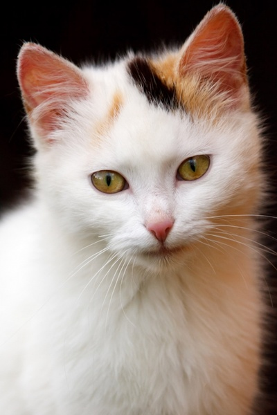 Cute Cat Picture Free Stock Photos Download 2 279 Free Stock Photos For Commercial Use Format Hd High Resolution Jpg Images