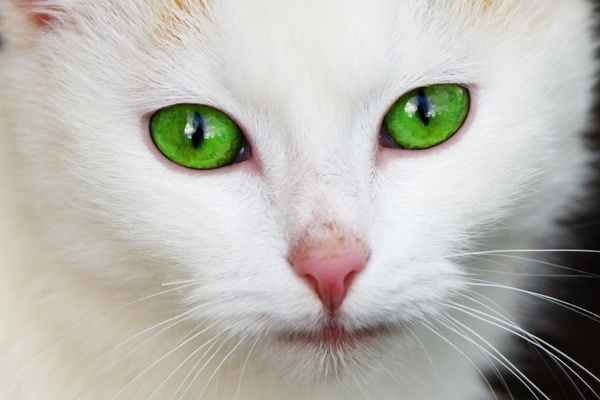 Beautiful cat wallpapers hd pictures – one hd wallpaper pictures.