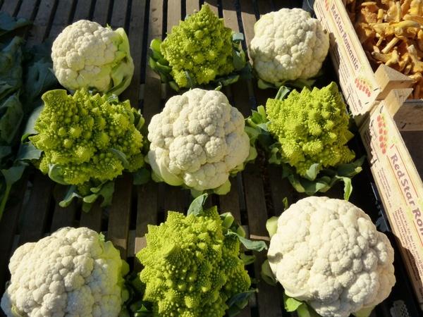 cauliflower kohl cabbage