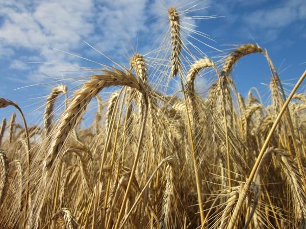 cereals sky summer