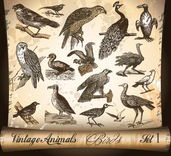 birds species icons collection classical handdrawn sketch
