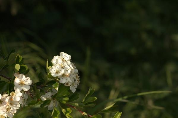 closeup of blossom 2