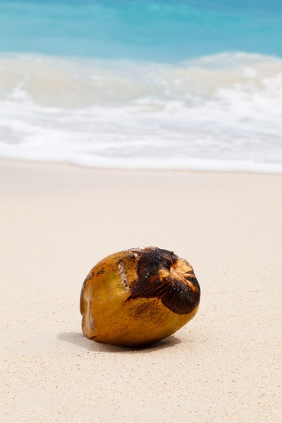 coconut in sand