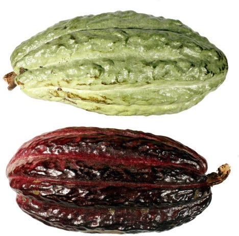 coffee beans fruit hd picture 1