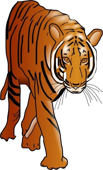 Color Tiger Drawing