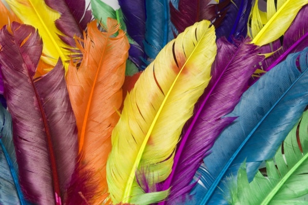 colorful feathers hd picture 2