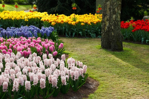 Colorful Flower Garden Free Stock Photos 4 93mb