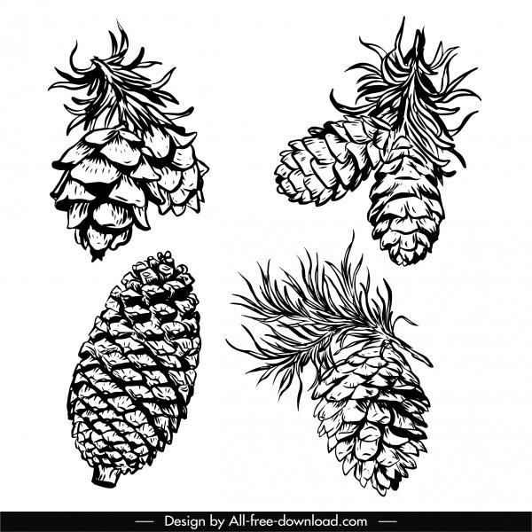 conifer pine cone icons black white handdrawn sketch