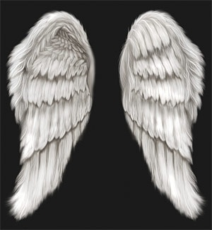 cool wings psd layered community picks