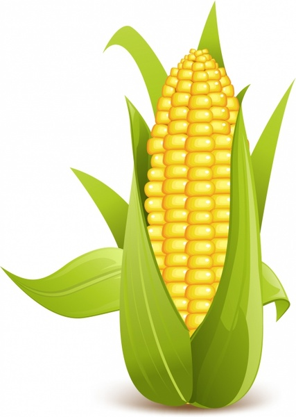 Corn on the cob free vector download (132 Free vector) for ...