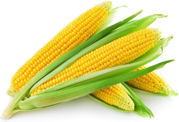 corn picture 02 hd pictures