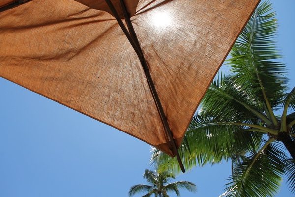 corner of umbrella under palm tree