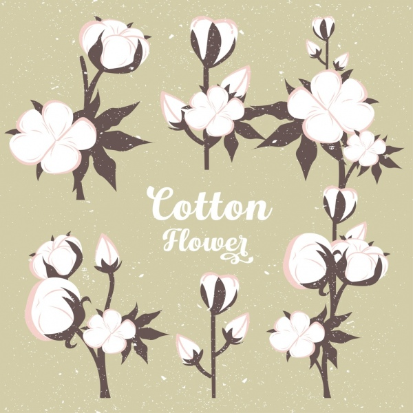 cotton flowers background vintage colored design