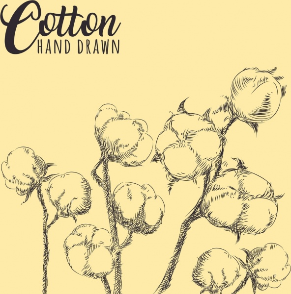 cotton flowers drawing hand drawn sketch