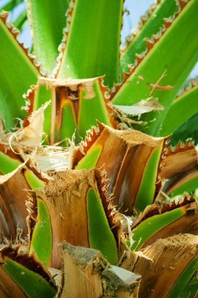 cut palm leaves