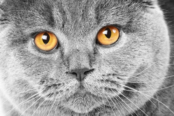 cute cat 02 hq pictures
