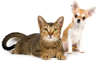 cute cat and dog picture 5