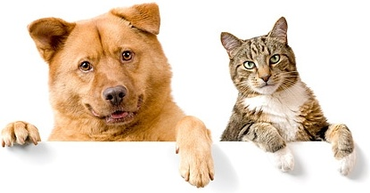 cute cat and dog picture 6