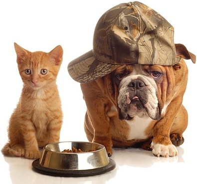 cute cat and dog picture 7