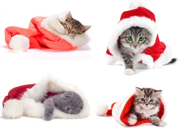 cute christmas hats and cats highdefinition picture