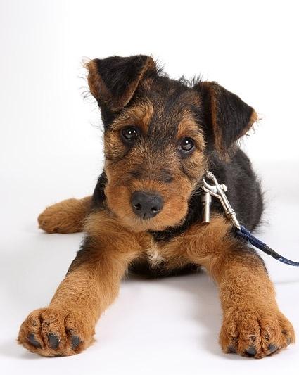 cute dog photo picture 1