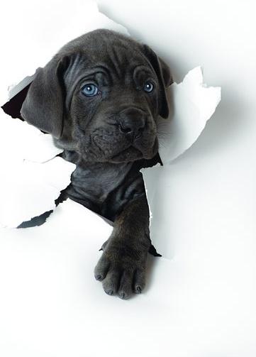 cute dog photo picture 3