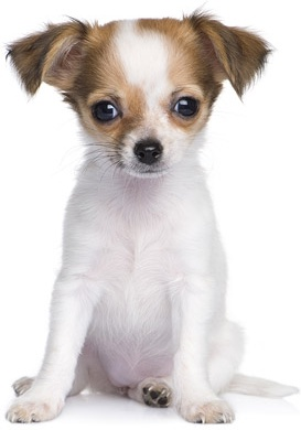 cute dog photo free stock photos download 2 308 free stock photos